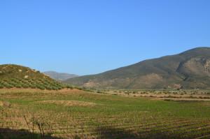 zona vinicola