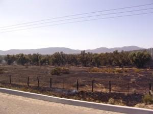 Alrededor de cinco hectáreas de olivo fueron afectadas por el incendio